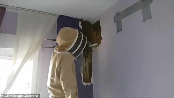 زوجان يكتشفان سر ضجيج حوائط منزلهما لمدة عامين (صور)