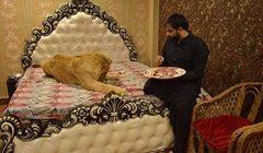 لقطات مخيفة لرجل يربي أسدا داخل منزله ويسمح له بالنوم على سريره !!! (بالفيديو)
