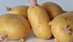 """هاني الناظر يوضح حقيقة وجود سموم خطيرة في """"براعم البطاطس"""""""