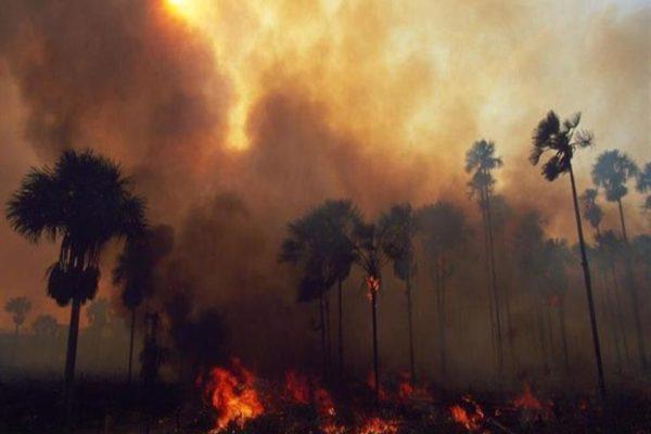 """فنلندا: حرائق الغابات المطيرة في البرازيل """"تهدد"""" الكوكب"""