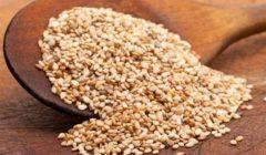 """ينتج البروتين والزيوت.. """"الزراعة"""" تضع خطة للتوسع في زراعة محصول السمسم"""