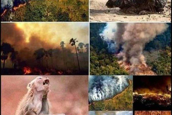 حرائق غابات الأمازون.. مخاطر تطال مصر والعالم أجمع