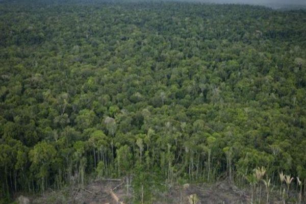 دول الأمازون توقع اتفاقا ضد تدمير الغابات المطيرة