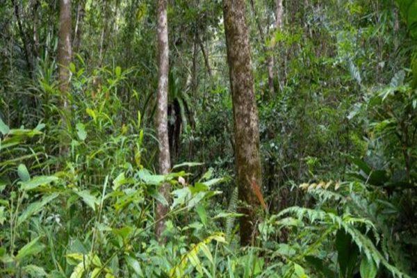 دول الأمازون تبحث استراتيجية للحفاظ على الغابات المطيرة