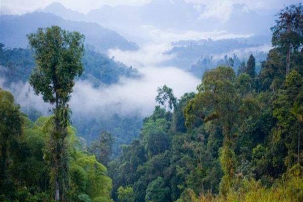 دول الأمازون تسعى لاتخاذ إجراءات للحفاظ على الغابات المطيرة