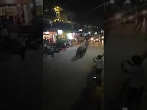 ما حقيقية تجول خرتيت فى شوارع مصر ؟!! .. شاهد بالفيديو