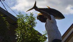 ضبط 7 أطنان من سمك المارلين في البرتغال