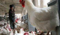 بالنسب المئوية.. الحكومة تعلن انخفاضات الدواجن واللحوم والخضر خلال الفترة الماضية