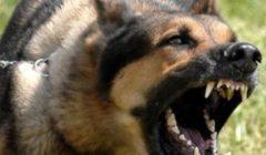 """ضبط شاب اعتدى على طفل بـ""""كلب شرس"""" ببولاق الدكرور"""