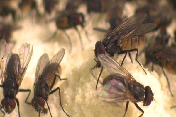 ينتهي خلال أسبوع.. أستاذ مناخ يكشف أسباب نشاط الذباب في مصر