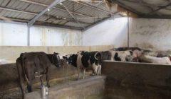 """""""الزراعة"""" تكشف حقيقة فرض ضريبة جديدة على مزارع الماشية"""