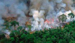 البرازيل فقدت 10 آلاف كيلومتر من غابات الأمازون في عام واحد