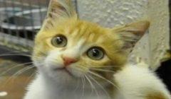 تصرف «مُقزز» من قطة بعد رفض صاحبتها تقاسم الطعام معها (فيديو)