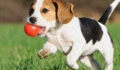 دراسة: الكلاب تبلغ منتصف أعمارها بيولوجيا في عامها الثاني