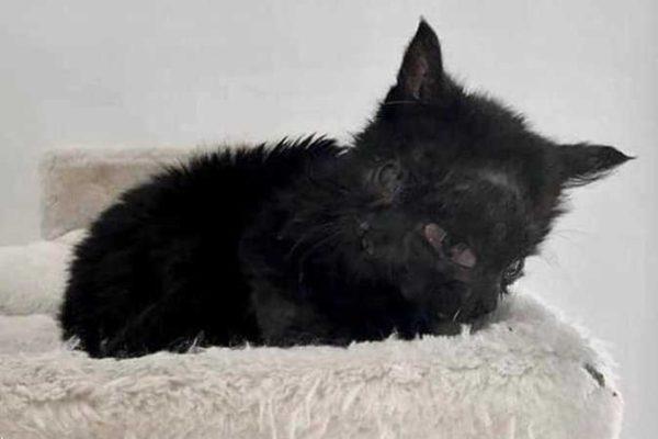 قطة بوجهين بسبب عيب خلقي.. وفيديو لأغرب طريقة أكل