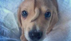 هل رأيت كلباً بـ«ذيل» بين منتصف العينين؟ غرابة الأمر أنقذته من التشرد (فيديو)