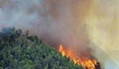 """أستراليا على موعد مع درجات حرارة قياسية وخطر """"كارثي"""" من حرائق الغابات"""
