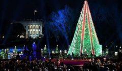 افتتاح شجرة عيد الميلاد ومشهد المهد في ساحة القديس بطرس