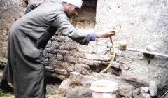 صائد الثعابين: «الطريشة» الأشد خطورة.. وصيد «الكوبرا» بـ500 جنيه