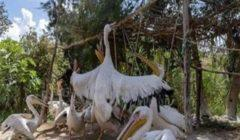 """""""شرطة البيئة"""" تضبط 146 طيور وحيوانات برية نادرة ومهددة بالانقراض في الإسكندرية"""