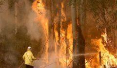 خبراء: حرائق الغابات في أستراليا ستزداد سوءا... وعلينا التأقلم معها