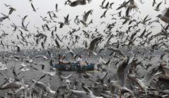طائر مهاجر يسقط في شبكة لصيد الأسماك في كينيا قادما من فنلندا