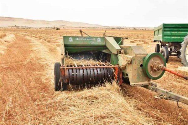 """""""الزراعة"""" تتابع محصول القمح في الغربية"""