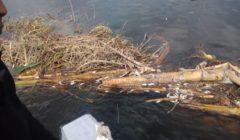 استخدما مواد كميائية ضارة.. ضبط شقيقين لقيامهما بصيد الأسماك بطرق مخالفة بنهر النيل