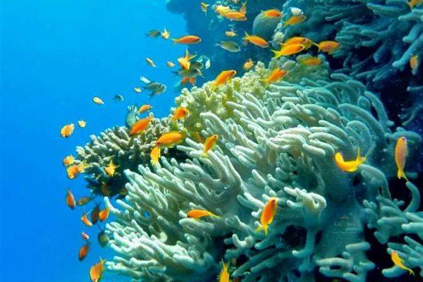 علماء يصدمون العالم: جميع الشعاب المرجانية ستختفي خلال 20 سنة