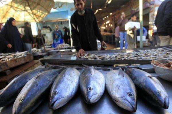 أسعار السمك والمأكولات البحرية اليوم بسوق العبور