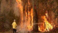 بكين: لا خسائر بشرية في حريق غابات جنوب غربي الصين