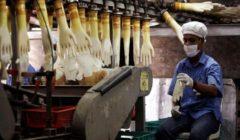 أكبر منتج قفازات في العالم يتوقع عجزا مع تصاعد حرب كورونا