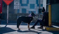 بريطانيا تقحم الكلاب في المعركة ضد كورونا