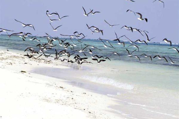 بعد غياب السائحين.. الطيور المهاجرة على شواطئ البحر الأحمر