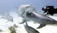 «بيجو» يقترح حملات لتنظيف أعماق البحر الأحمر