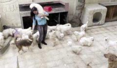بعد التخلص منها.. «ميرا» تستقبل عشرات الكلاب والقطط بملجئها