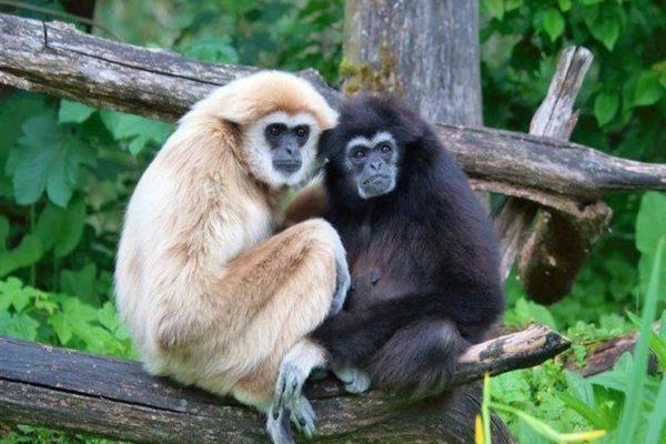 شبح الجوع يطارد القردة في نيبال في ظل إغلاق البلاد بسبب كورونا