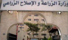 """""""تحول الفصول"""".. الزراعة تكشف سبب استنشاق المصريين رائحة الفل والياسمين"""