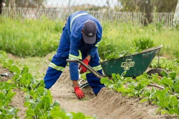 رومانيا تستثني عمال الحصاد من حظر السفر المفروض بسبب كورونا