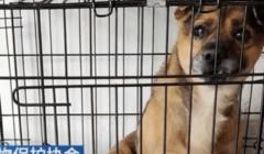 قصة وفاء.. كلب ينتظر صاحبه المتوفى بـ«كورونا» داخل مستشفى منذ 3 أشهر