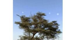 «رصد النجوم».. موروث قبائل جنوب البحر الأحمر لمعرفة الوقت والاتجاهات والطقس (صور)