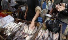 زيادة أسعار السمك البوري والجمبري الجملة خلال أسبوع العيد