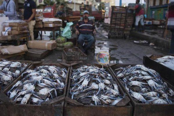 أسعار السمك والمأكولات البحرية في آخر أيام رمضان