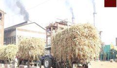 الحكومة: لا صحة لتصريف مخلفات مصنع سكر نجع حمادي في النيل