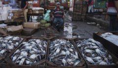 27 جنيها لكيلو البلطي.. تعرف على أسعار السمك اليوم بسوق الجملة