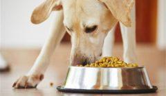 قانون حكومي جديد.. تحصيل 25% على أغذية الكلاب والقطط والطيور لتنمية موارد الدولة
