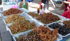 من الخفاش حتى جلود الحمير.. 4 أسباب جعلت الصينيين يأكلون كل شيء