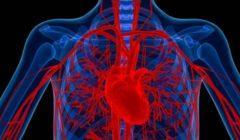 أستاذ جراحات أوعية يوضح تأثير ارتفاع سكر الدم على الأوعية الدموية