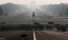 الهند.. مخاوف من تفشي كورونا بولاية ميروت بعد سرقة قرود لعينات دم