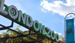 بعد إغلاق دام 3 أشهر.. حديقة الحيوان في لندن تستقبل زوارها الاثنين